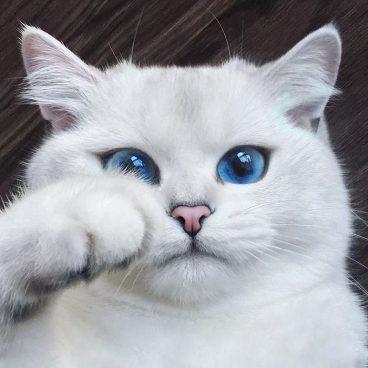 Trucos para saber cómo calmar a un gato nervioso