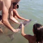 Turistas de una playa matan a una cría de delfín
