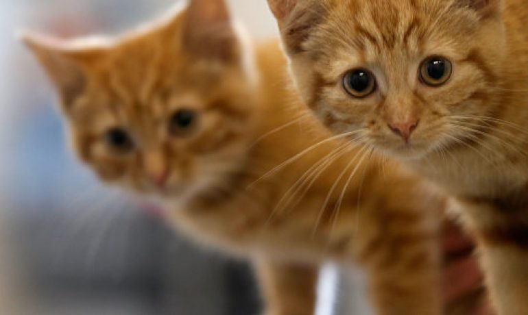 Twitter se llena de gatos tras el atentado de Barcelona