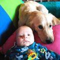 Un perro salva la vida a un bebe de unas semanas
