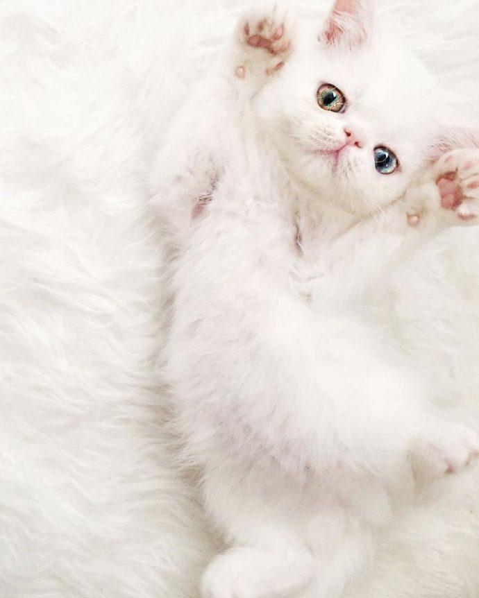la gatita con heterocromía que conquista internet