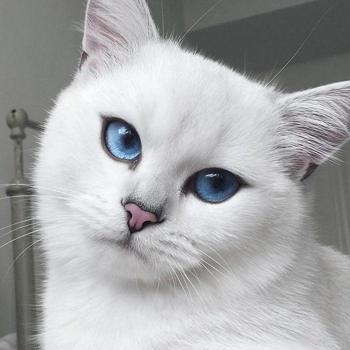 10 Razones para tener un gato como mascota