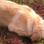6 Consejos para que mi perro deje de cavar en el jardín