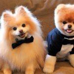 6 Señales de cardiopatía en perros