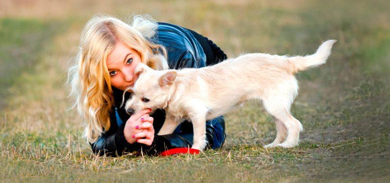 Cómo adiestrar a un cachorro