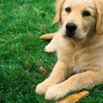 Cómo detectar la artrosis canina y ayudar a tu perro a sentirse mejor