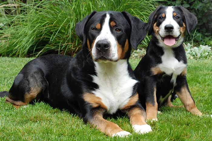 Cómo es la leche maternizada para cachorros