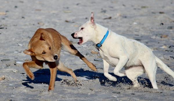 Cómo evitar que dos perros se peleen