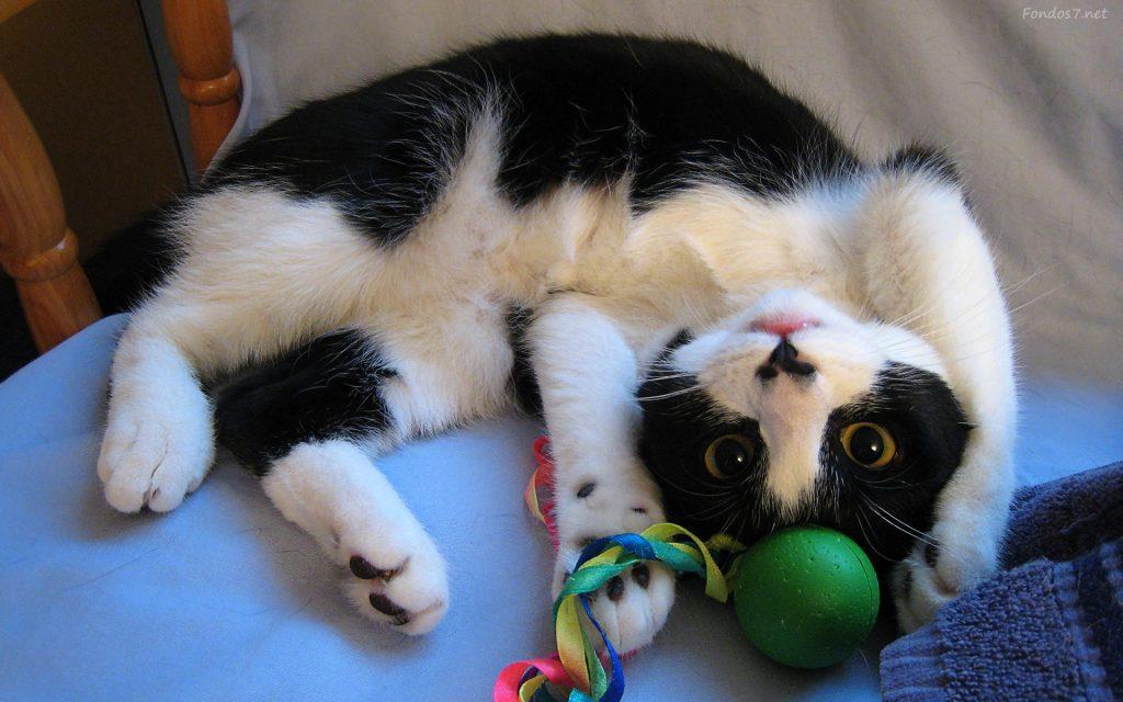 Cómo hacer juguetes para gatos