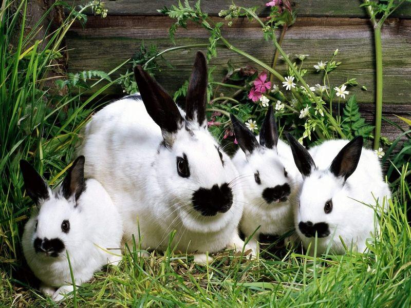 Cómo llevar a cabo la cría de conejos