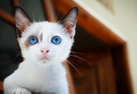 Cómo se forman los cristales de estruvita en gatos