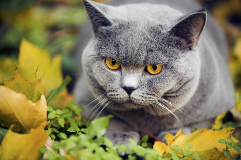 Causas de la ictericia en gatos