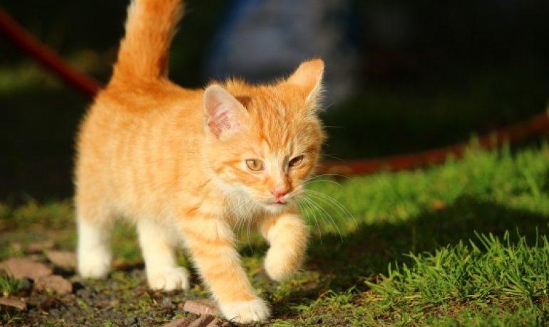 Ceguera en gatos