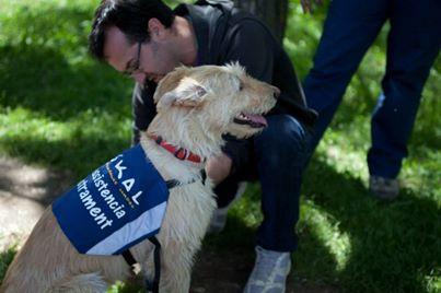 Como son los perros adiestrados para asistir a personas sordas