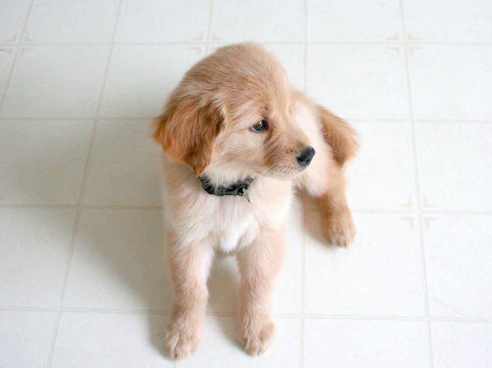 Consejos para acabar con la agresividad canina