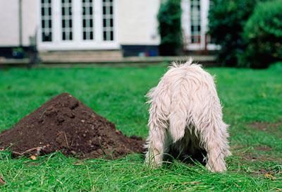 Consejos para que mi perro deje de cavar