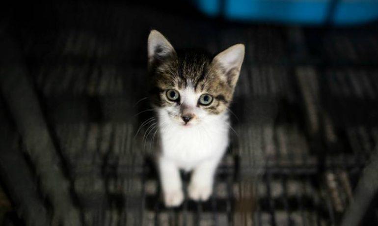 Descubre si se puede prevenir el virus de la leucemia felina