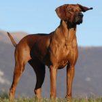 Ejercicios para perros obesos