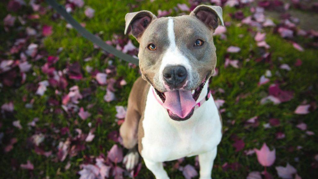 El mejor tratamiento de la otitis canina