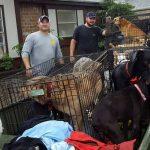 Esta heroína ha rescatado 21 perros en Houston
