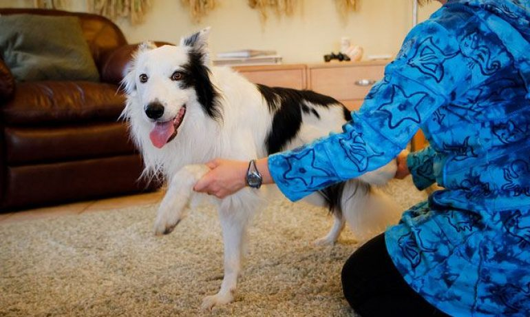 Estiramientos para mantener ágil a un perro