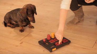 Juegos interactivos para perros