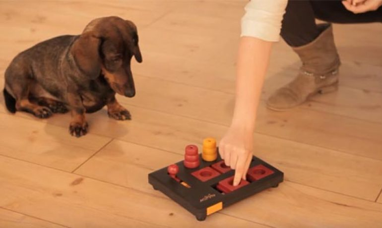 Juegos Interactivos Para Perros La Clave De Su Equilibrio Emocional