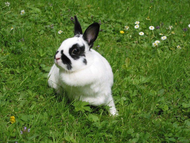 Las enfermedades de los conejos domésticos más frecuentes
