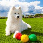 Los 7 mejores juegos interactivos para perros
