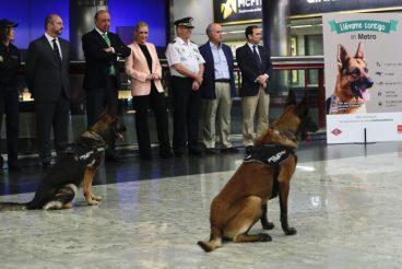 Los perros ya llevan un año utilizando el Metro de Madrid