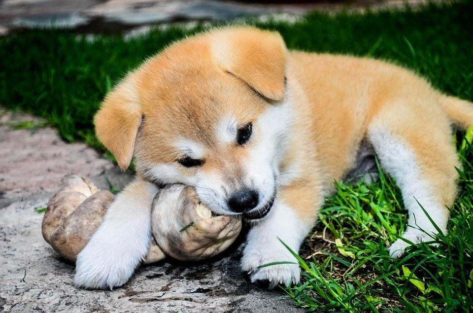 Mi perro come piedras