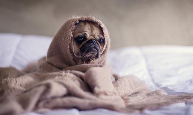 Mi perro se orina en la cama