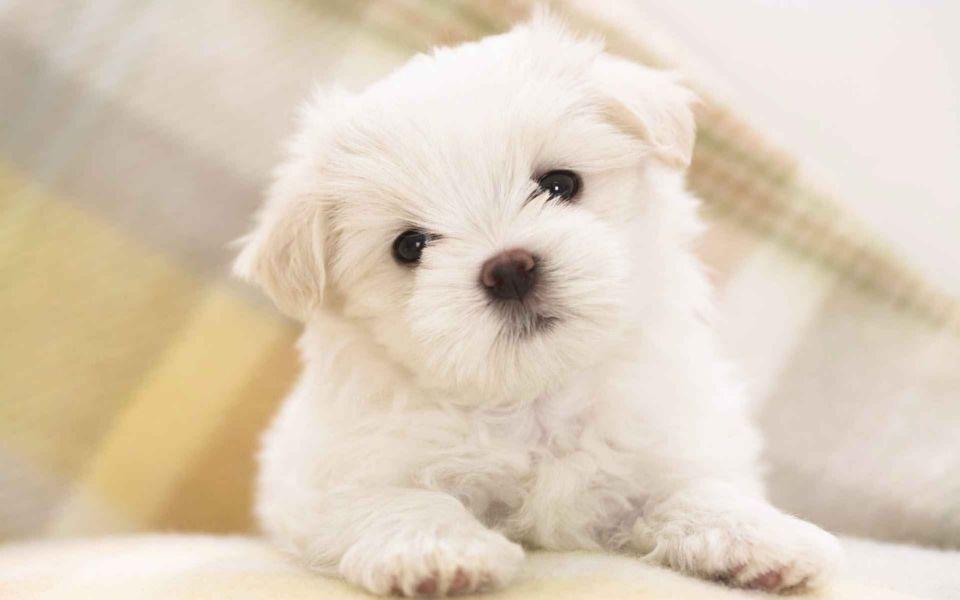 Para qué se utiliza la furosemida en perros