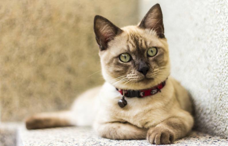 Pruebas para saber si tu gato es ciego