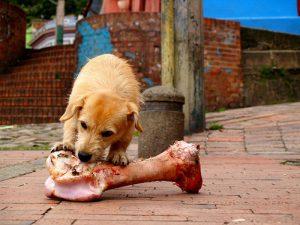 Puedo darle huesos a un perro