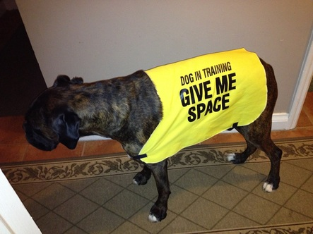 Qué es el Yellow Dog Project