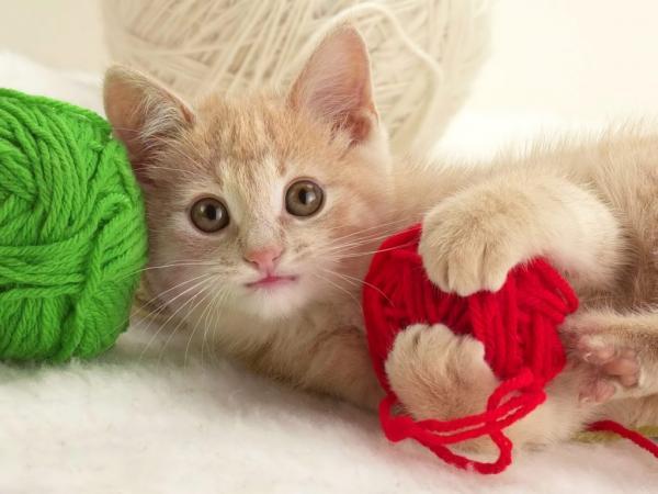 Qué hacer ante la diarrea en gatos