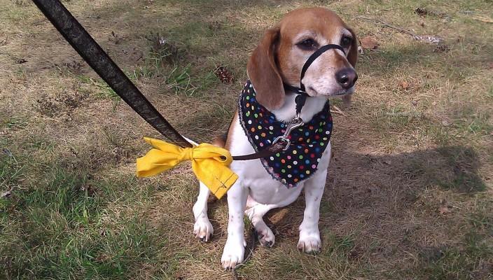 Qué hacer si ves un perro del Yellow Dog Project