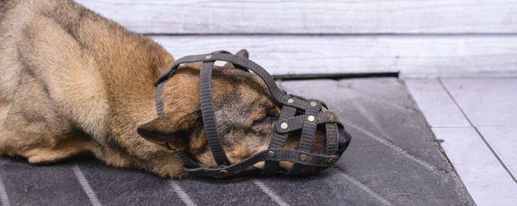 Qué perros tienen que llevar bozal y cuándo
