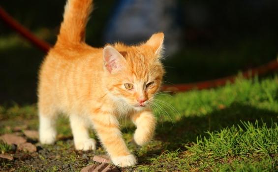 Síntomas de la bronquitis en gatos