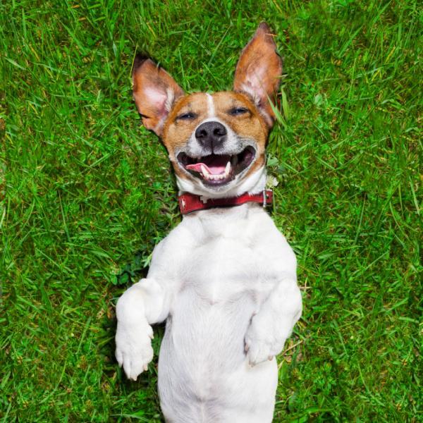 Síntomas de la gingivitis en perros