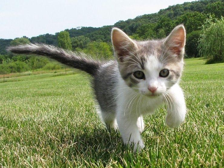 Síntomas de la sarna en gatos