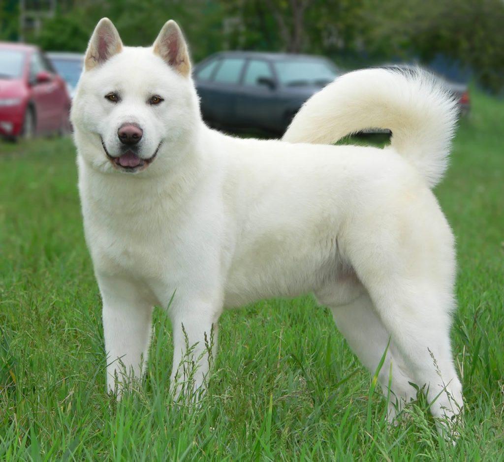 Síntomas de vejez en perros