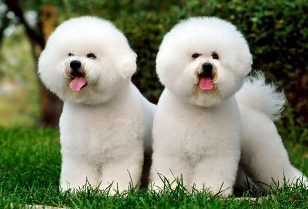 Señales de cardiopatía en perros