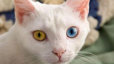 Todas las causas de la ictericia en gatos