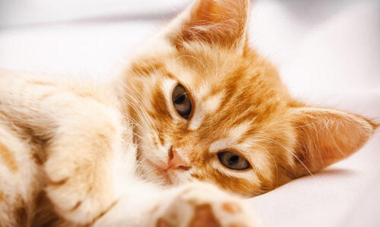 Todo lo que debes saber sobre el parto felino