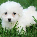 Todo lo que debes saber sobre la periodontitis en perros