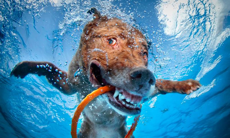 Tratamiento de la gingivitis en perros