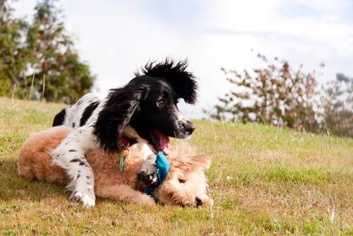 Tratamiento de la influenza canina