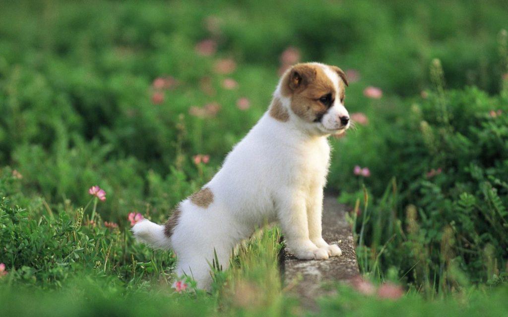 Tratamiento de las heces amarillas en perros